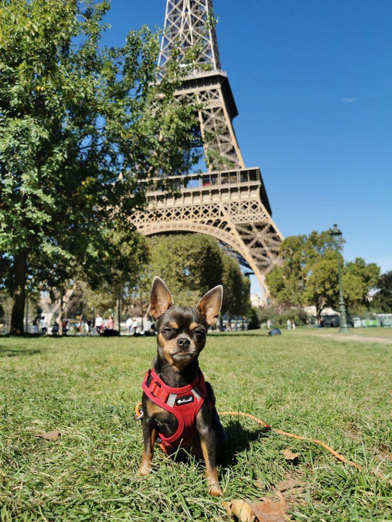 Hund vor Eiffelturm