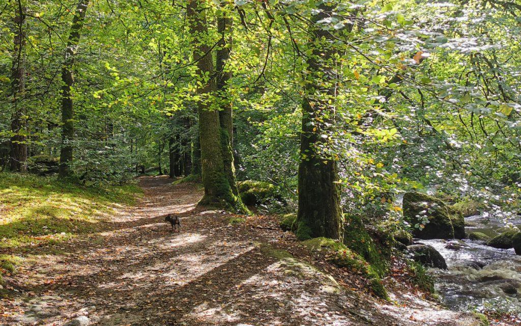 Wandern im Wald von Huelgoat.
